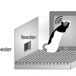 Touchscreen Platforms for Rodents