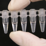 Accurate Enzymatic Assays in PCR Tubes